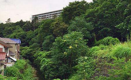 計画地の裏面は緑豊かな景観